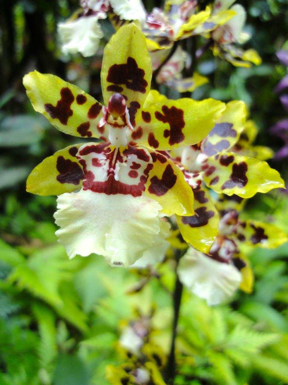 Hawai'i Tropical Botanical Garden