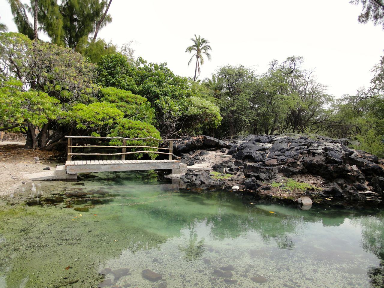 Kiholo Bay - Coconut Grove