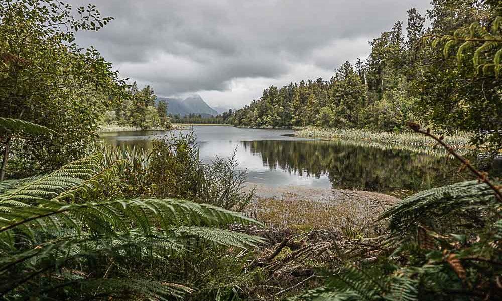 Les fougères néozélandaises – 100% photos (ou presque)