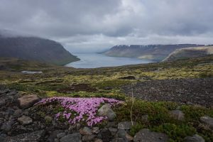 Fjords Ouest Islande