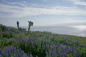 Islande - Drangsnes