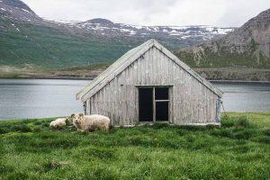Road trip dans les fjords de l'ouest de l'Islande