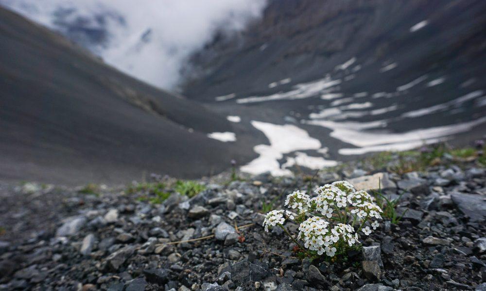 Une nuit au cœur du Parc national suisse