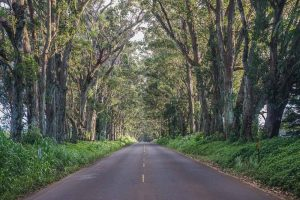 Kauai - Tree Tunnel Road